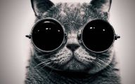 Funny Black Cat Pictures 27 Widescreen Wallpaper