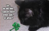 Funny Black Cat Pictures 37 Free Hd Wallpaper