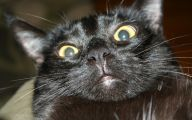 Funny Black Cat Pictures 4 Wide Wallpaper