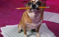 Funny Cartoon Dog Pictures 10 Wide Wallpaper