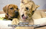 Funny Cartoon Dog Pictures 22 High Resolution Wallpaper