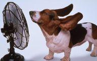 Funny Cartoon Dog Pictures 27 Widescreen Wallpaper