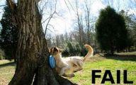 Funny Cat Fail Pics 11 Free Wallpaper