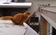 Funny Cat Fail Pics 13 High Resolution Wallpaper