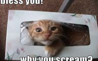Funny Cat Fail Pics 15 Cool Hd Wallpaper