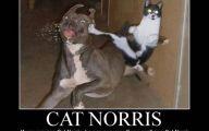 Funny Cat Fail Pics 16 Cool Hd Wallpaper