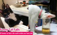 Funny Cat Fail Pics 19 Free Hd Wallpaper