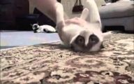 Funny Cat Fail Pics 22 Widescreen Wallpaper