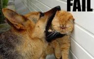Funny Cat Fail Pics 23 Cool Wallpaper