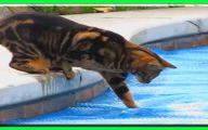Funny Cat Fails  10 Free Hd Wallpaper