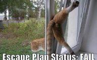 Funny Cat Fails  11 Free Wallpaper