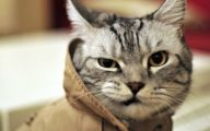 Funny Cat Fails  12 Cool Hd Wallpaper