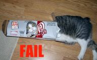 Funny Cat Fails  16 Wide Wallpaper