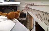 Funny Cat Fails  19 Cool Hd Wallpaper