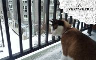 Funny Cat Fails  22 High Resolution Wallpaper
