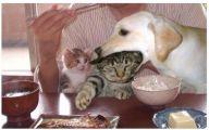 Funny Cat Fails  4 Wide Wallpaper