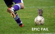 Funny Cat Fails  5 Cool Hd Wallpaper