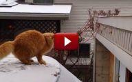 Funny Cat Jump Fails 11 Free Hd Wallpaper