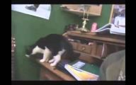 Funny Cat Jump Fails 22 Background