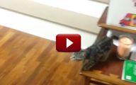 Funny Cat Jump Fails 25 Widescreen Wallpaper