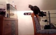 Funny Cat Jump Fails 27 Background Wallpaper