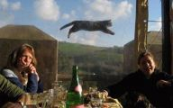 Funny Cat Jump Fails 6 Cool Wallpaper