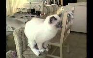 Funny Cat Jump Fails 7 Cool Hd Wallpaper