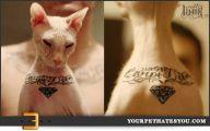 Funny Cat Tattoo 50 Hd Wallpaper
