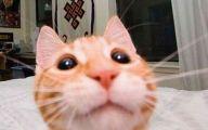 Funny Jokes About Selfies 23 Hd Wallpaper