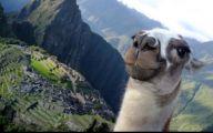 Funny Selfie Pictures 1 Desktop Wallpaper