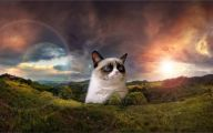 Really Funny Cats 1 Cool Wallpaper