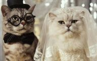 Really Funny Cats 2 Free Hd Wallpaper