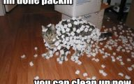 Really Funny Cats 4 Widescreen Wallpaper