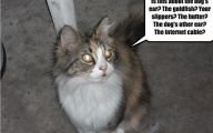 Really Funny Cats 8 Background