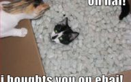 Very Funny Cat Photos 10 Widescreen Wallpaper