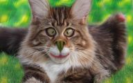 Very Funny Cat Photos 15 Cool Hd Wallpaper