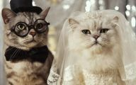 Very Funny Cat Photos 16 Desktop Wallpaper