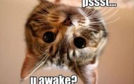 Very Funny Cat Photos 9 Desktop Wallpaper