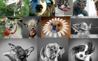 Weird And Crazy Dogs 13 Cool Wallpaper