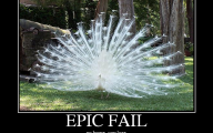 Epic Horse Fail Pictures 3 Wide Wallpaper