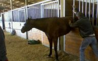 Epic Horse Fail Pictures 5 High Resolution Wallpaper