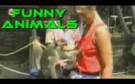 Funniest Animal Bloopers 5 Background Wallpaper