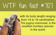 Funny And Weird Facts 2 Desktop Wallpaper