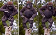 Funny Animals Dancing 14 Cool Wallpaper