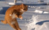 Funny Animals Dancing 27 High Resolution Wallpaper