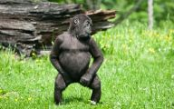 Funny Animals Dancing 28 High Resolution Wallpaper