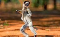 Funny Animals Dancing 33 Wide Wallpaper
