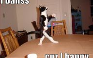 Funny Animals Dancing 34 Hd Wallpaper
