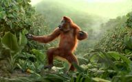 Funny Animals Dancing 35 High Resolution Wallpaper