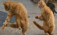 Funny Animals Dancing 7 Wide Wallpaper